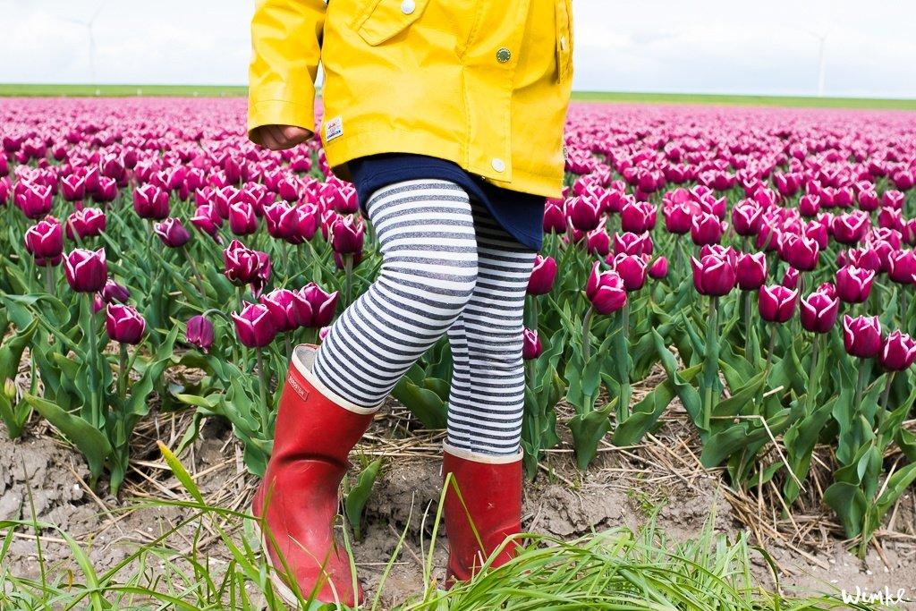 Tulpenvelden - Wimke