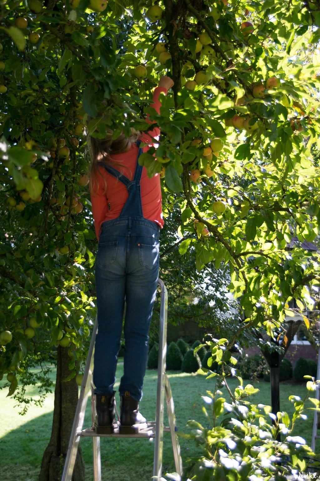 Van een mand geplukte appels maak je een appelclafoutis