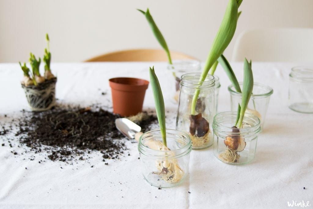 lentebloeiers in glazenpotjes - www.wimke.nl