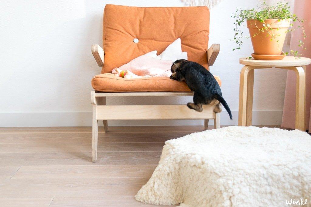 Dit is onze ruwharige teckelpup Saar - wimke.nl