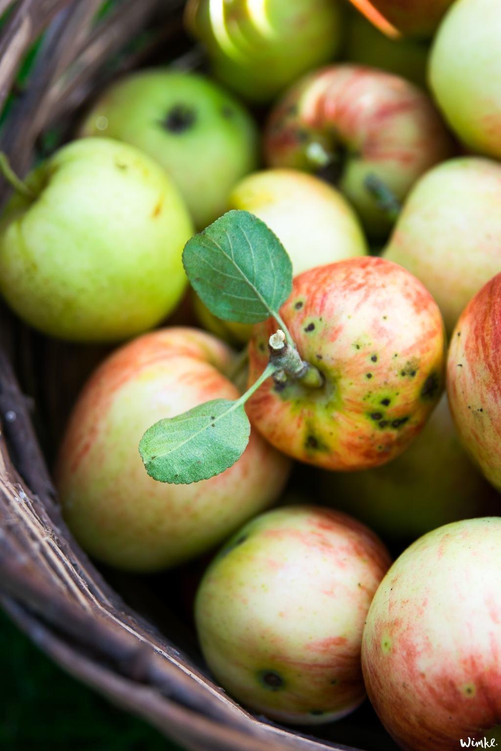 Zo maak je zelf appelchips - www.wimke.nl