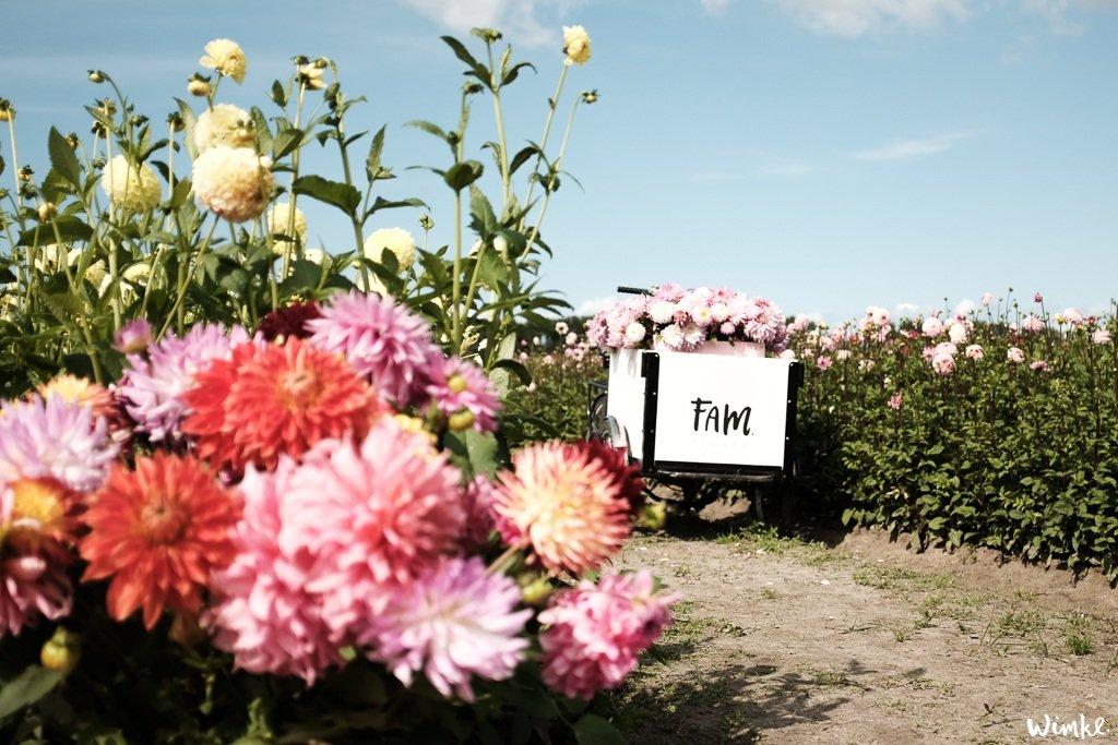 Lunchen tussen de dahlia's van FAM Flower Farm - www.wimke.nl